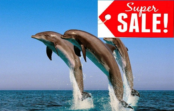 DOLPHIN-OFFER